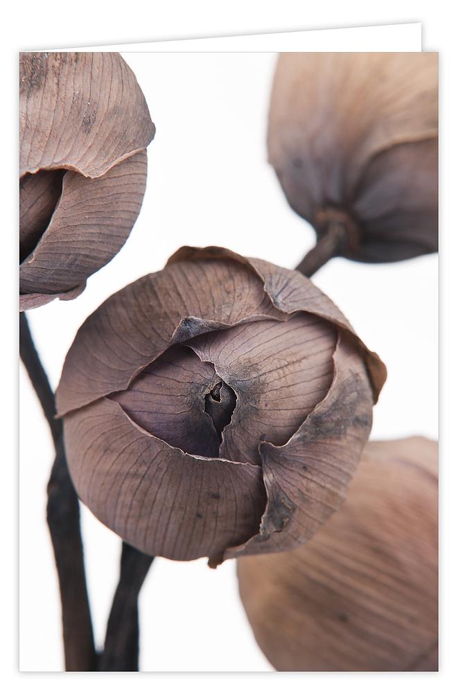 Doos Wenskaarten Coral Rose